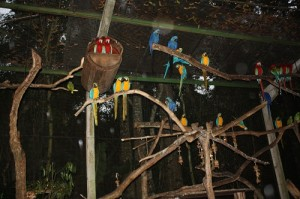 No Parque das Aves as diversas espécies de araras são um convite à contemplação